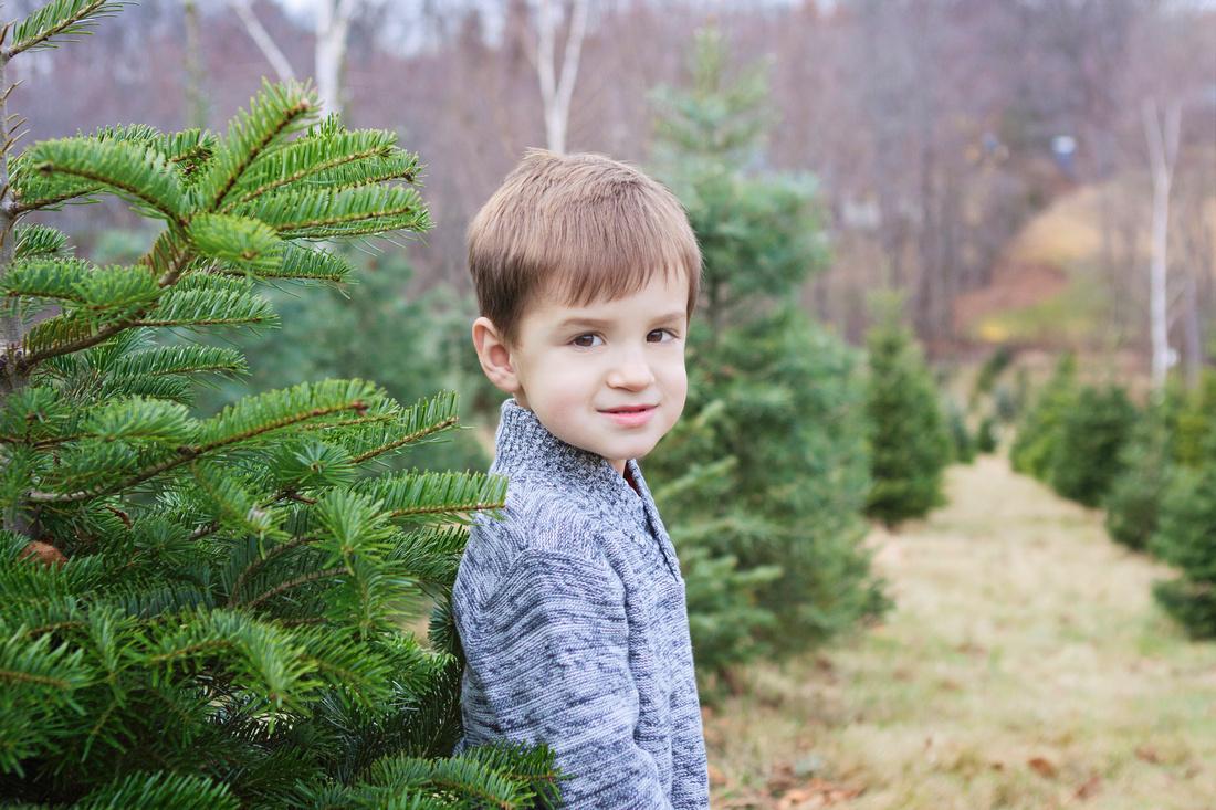 Auburn Massachusetts Tree Farm Mini Session